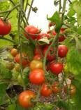 holsworthy organics
