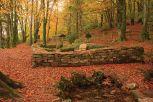 chapel-wood